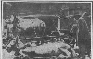 Horse on ice-12-26-1914