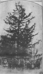 Lancaster Ave Tree-12-13-1914