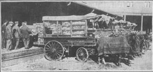 Turkeys Arriving-11-24-1914