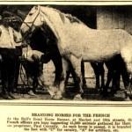 8-25-1915 Branding Horses