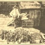 Hennery and Farm