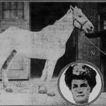 12-14-1915 Old Joe