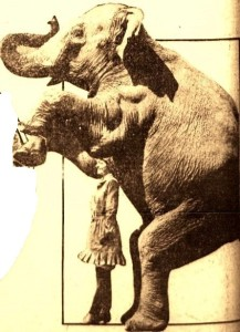 5-1-1916 Elephant